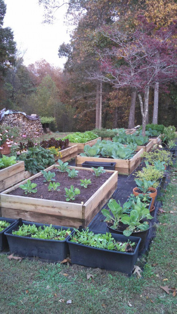 Gardening in the fall can be relaxing. get the soil prepared, make a list of the seeds you'd like to plant. There are 2 planting seasons and one in the fall. You can harvest in your garden almost all year round, like the owner of CContractorMen 30 Industrial Park Road Suite 112 Dawsonville GA 30534 does.